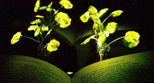 Ученые создали породу деревьев, которые светятся